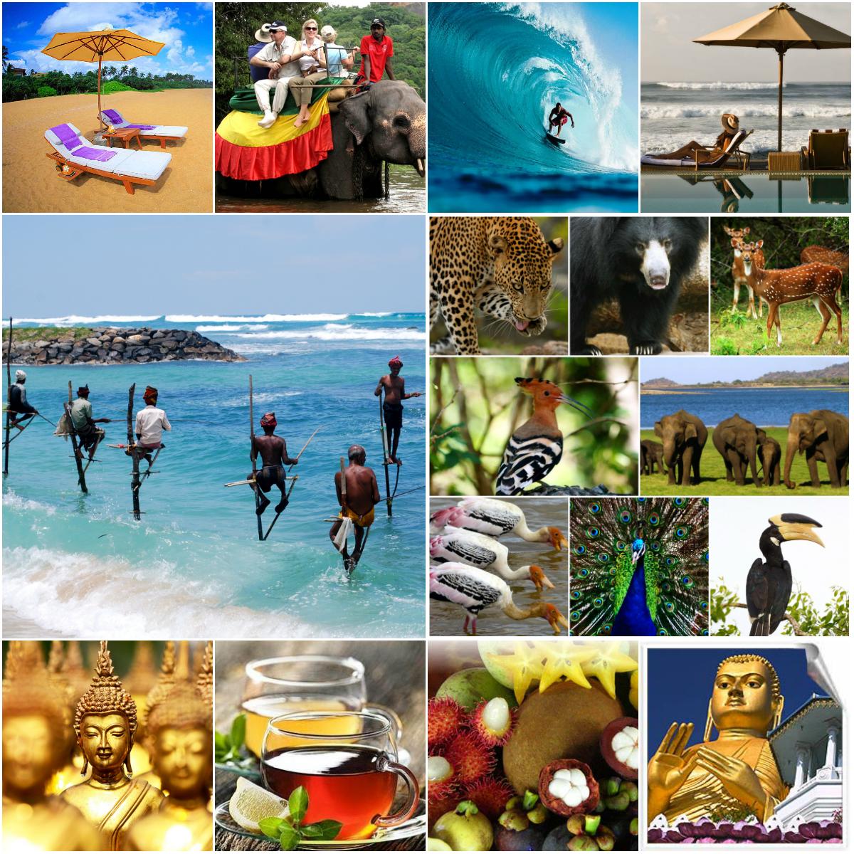 čo robiť na sri lanke_cestovanie_pláž_budha_čaj_travelhacker