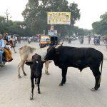 India, kravy