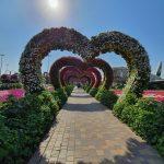 Miracle Garden, Dubaj