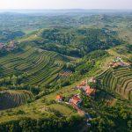 Goriška brda_Slovinsko