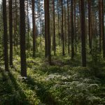 príroda_repelent